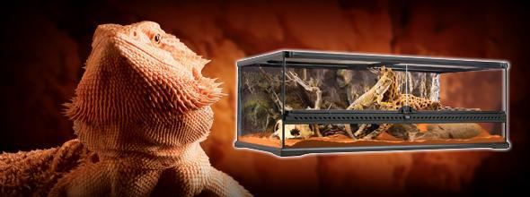 Exo Terra Bearded Dragon Starter Kit Glass Vivarium Set Up