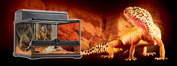 Exo Terra Leopard Gecko Starter Kit Glass Vivarium Set Up
