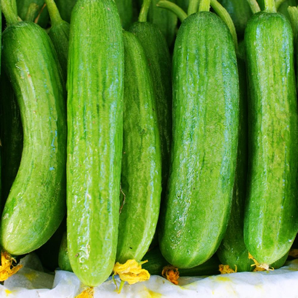 Vegetable Cucumber Lemon 25 grams appx 1000 seeds  Bulk
